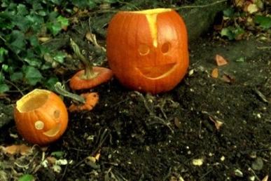 pumpkin_compost-620x302